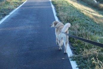 Hund-zieht-an-Leine