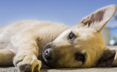 Fakten-über-Hunde