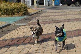 Hund-Stadtverkehr