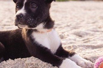 Hund-Zwingerhaltung