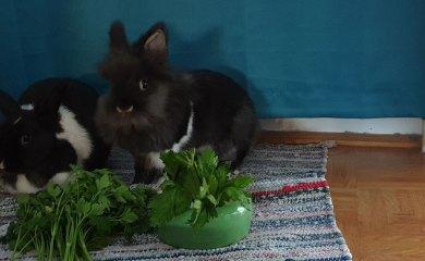 Kaninchen-Körpersprache