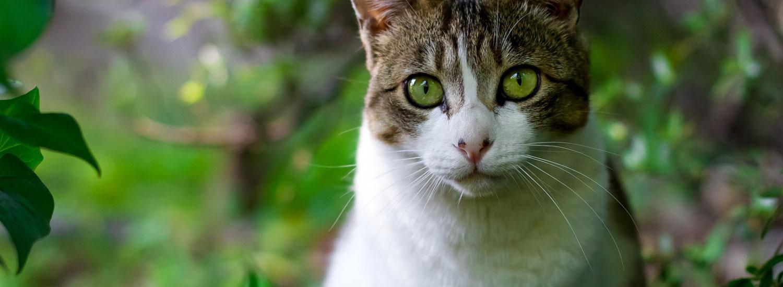 Katze-Pflanzen