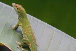 Dein Leitfaden für die artgerechte Haltung von Madagaskargeckos