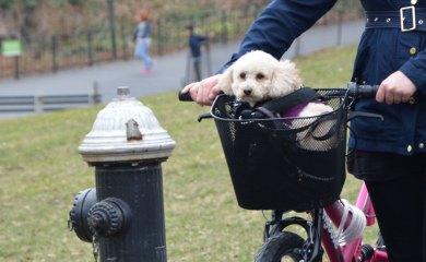 Lastenfahrrad-für-Hunde
