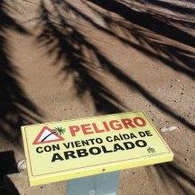 Gefährliche Palmen