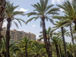 Die Stadt Elche hinter Palmen