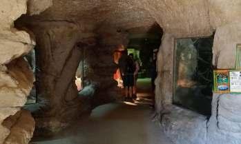 Im Terrarium gibt es viele Tiere zu entdecken