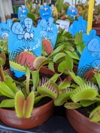 Fleichfressende Pflanze gegen Moskitos?