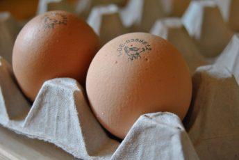 Durch das von Hand gestempelte Logo sind die Eier unverwechselbar!