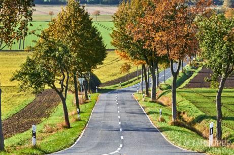 Baum-Alleen, Herbst-Landschaft #nhavo