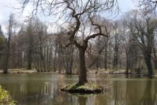 Ein Baum mitten im Wasser