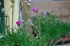 Passend zum Frühjahr gab es natürlich auch Blumen