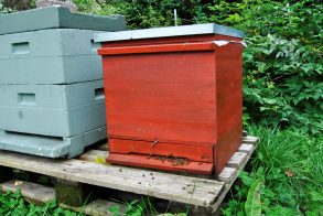 Wisst ihr wo die Bienen wohnen?