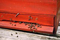Viele Bienen werden in diesen Kästen gehalten.