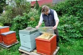 Bienenbehausung in Magazinbeuten. #barnstorferhonigbeute