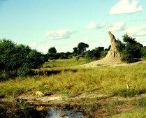 Schakal vor Termitenhügel
