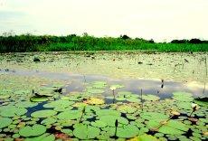 Grüne Wasserlandschaft