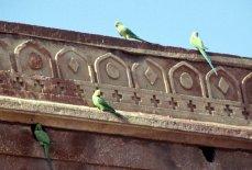 Verbliebene Bewohner von Fatehpur Sikri
