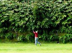 Azoren-Golf_04