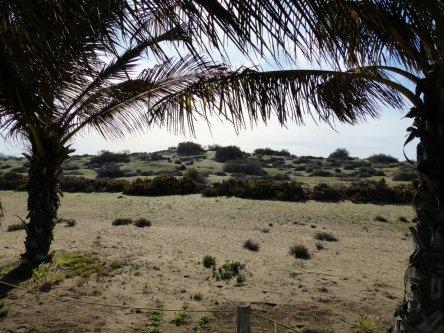 Maspalomas Golf, die Dünen als natürliche Bunker