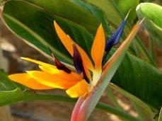 Blumenpracht im Dezember