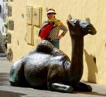 Das Kamel bewacht sein Hotel