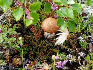 Ein Pilzparadies - Island
