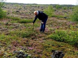 Thilo als Pilzsammler - Island