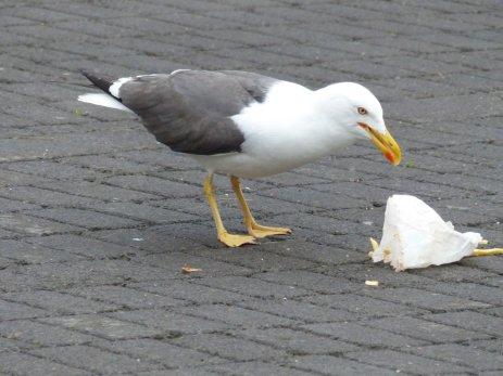 Natürliche Müllabfuhr - Island