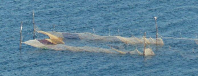 passiver Fischfang vor der Küste