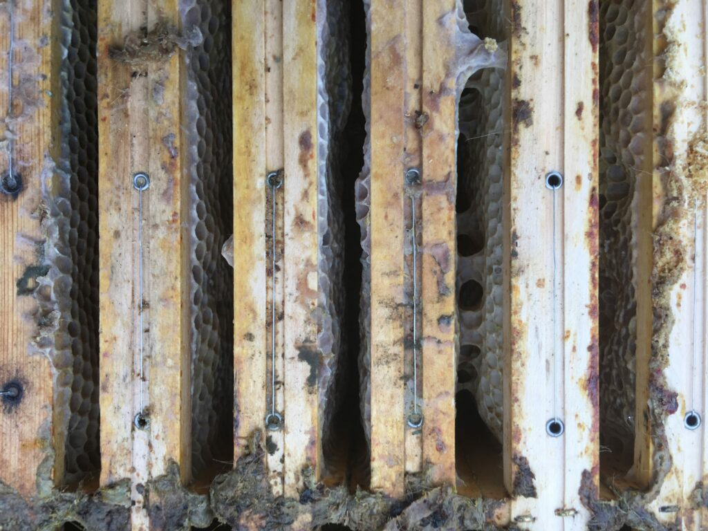 Oberansicht Oxuvar Winterbehandlung Bienenbox Volk 6