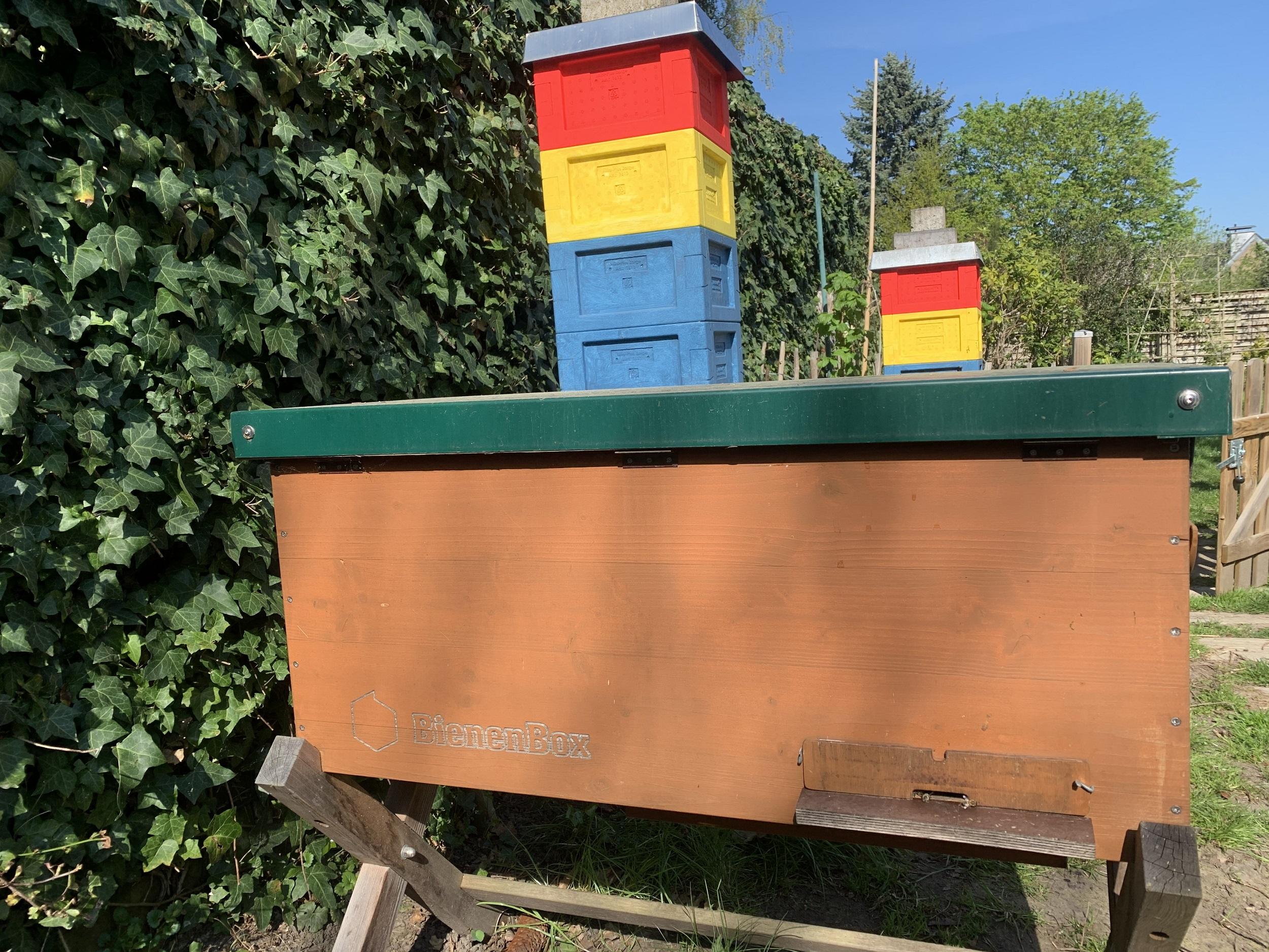 Bienenbox Volk 6 Bild April 2020
