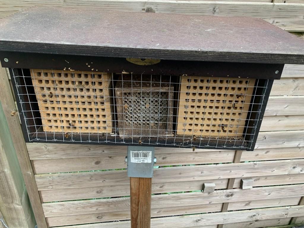 Mauerbienen im April Nisthilfe 1