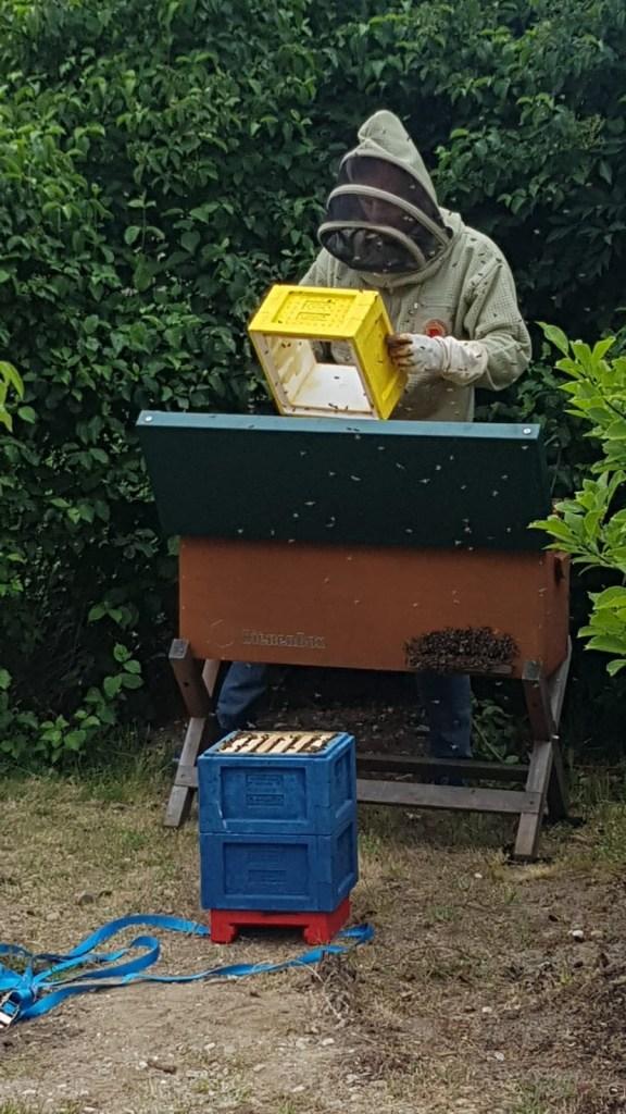 Schwarm 1 Bienenbox