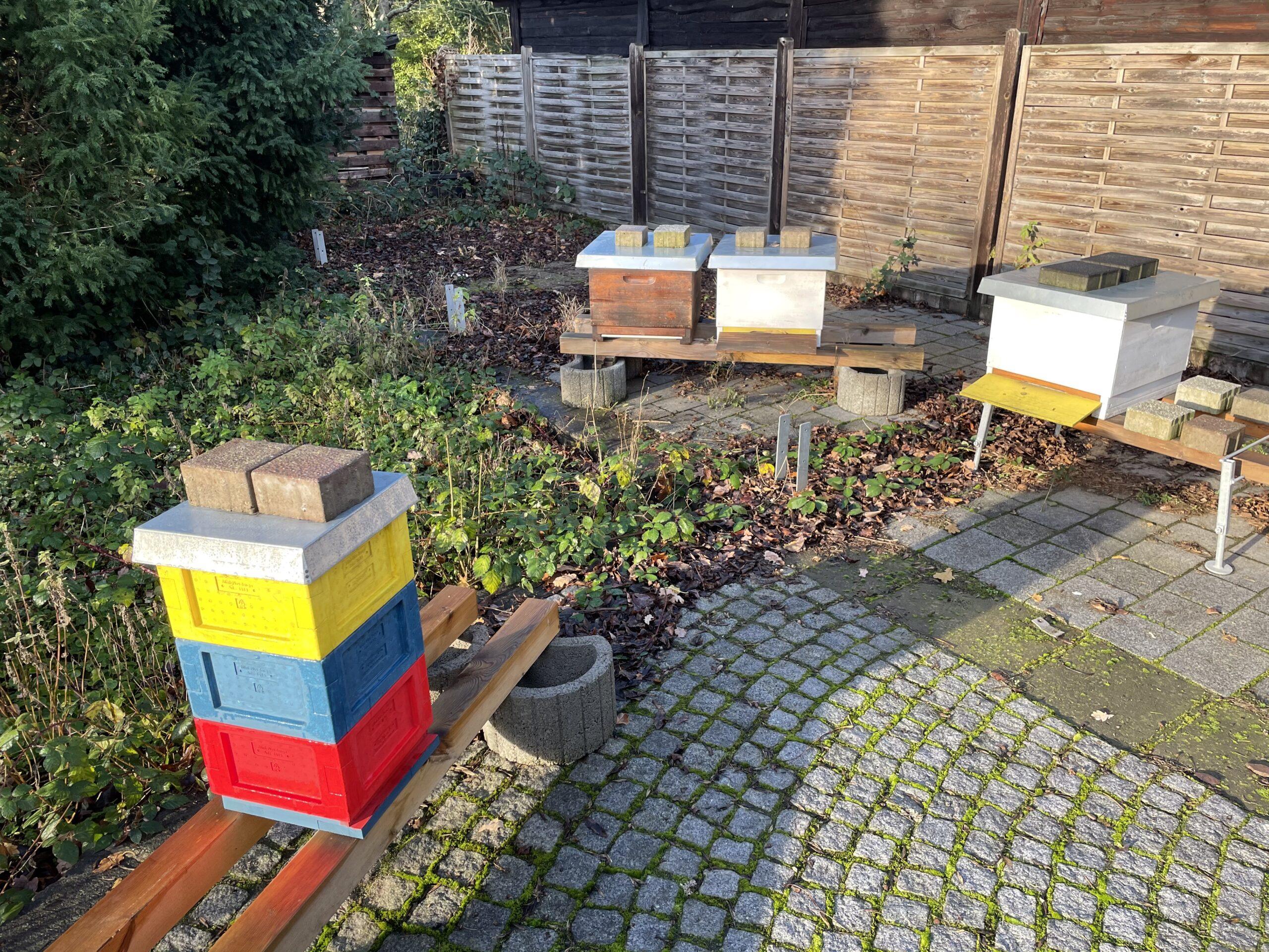 Bienenjahr 2021 Bild