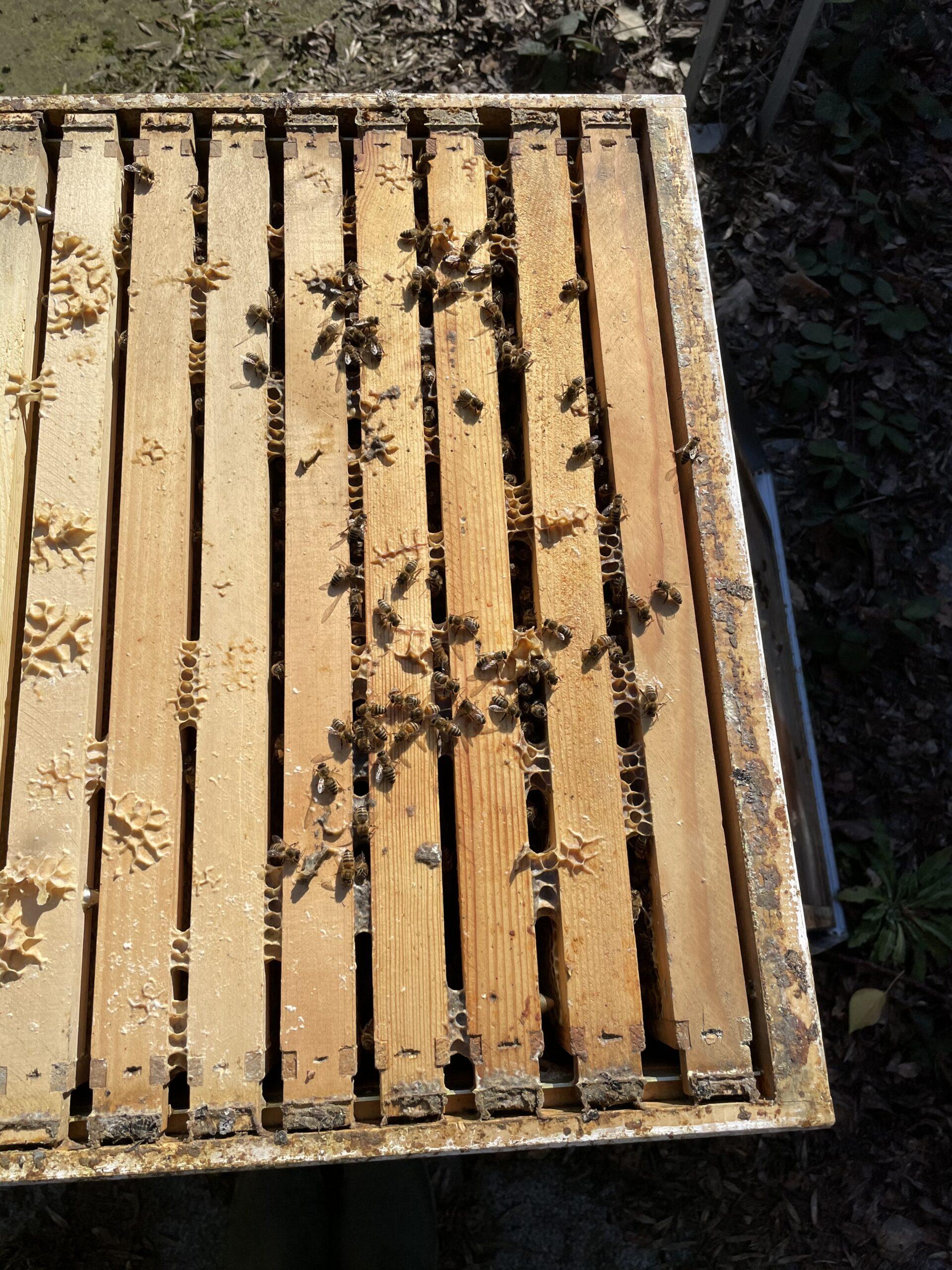 Bienen Ende Februar Bild