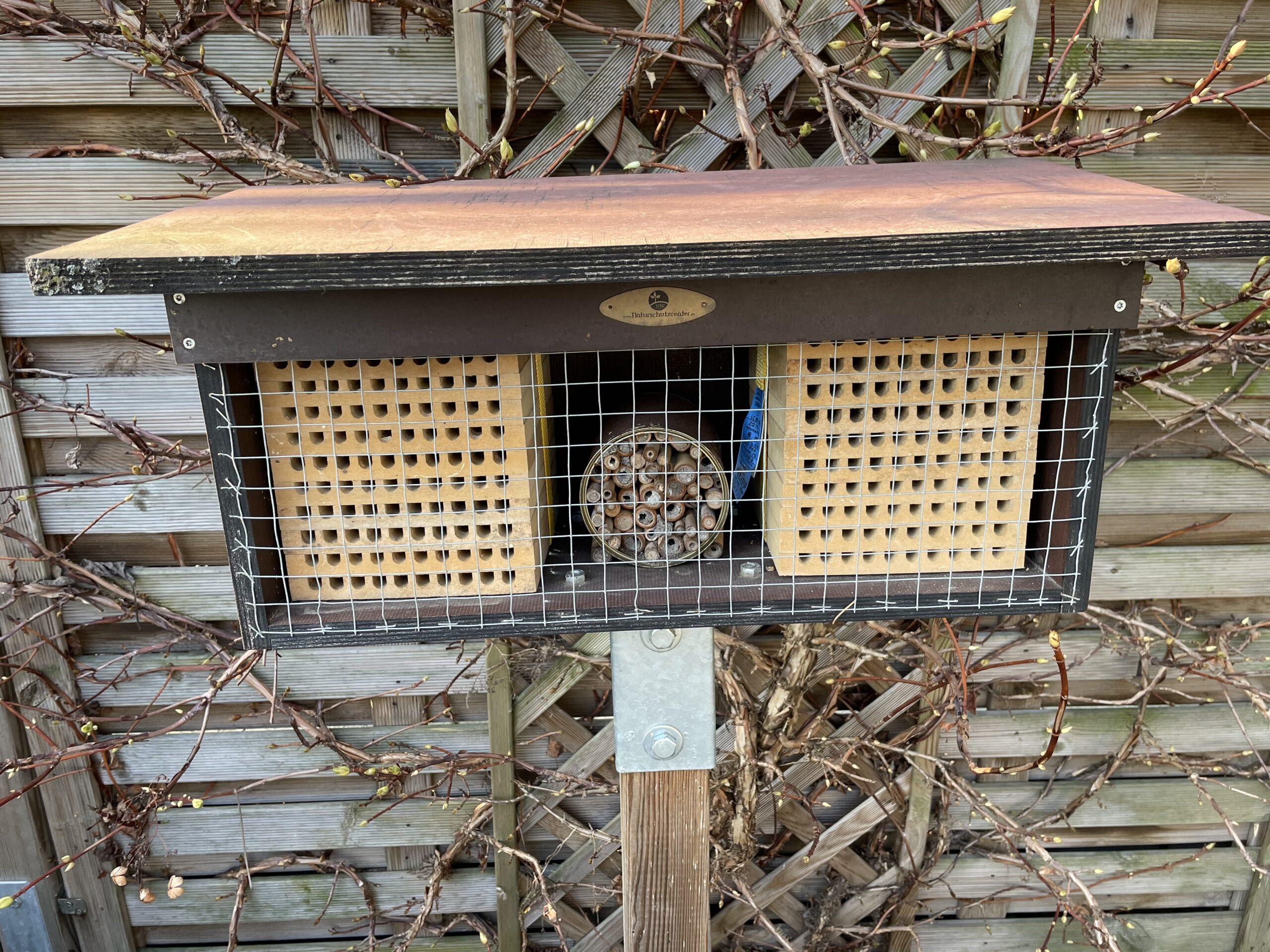 Die Wildbienen Saison rückt näher Bild