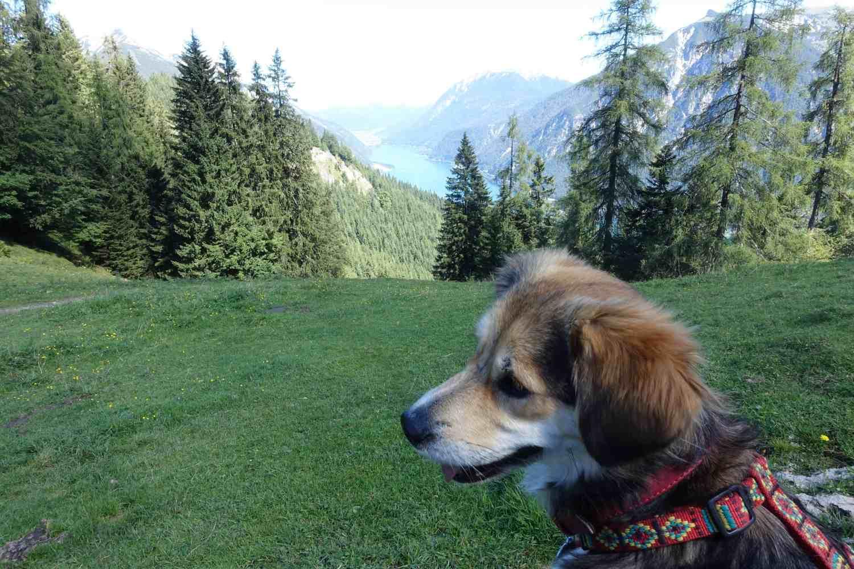Pertisau mit Hund 1