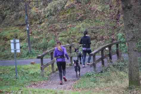 Joggen mit dem Zughund