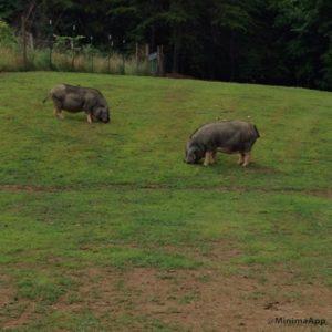 illinois-girls-grazing