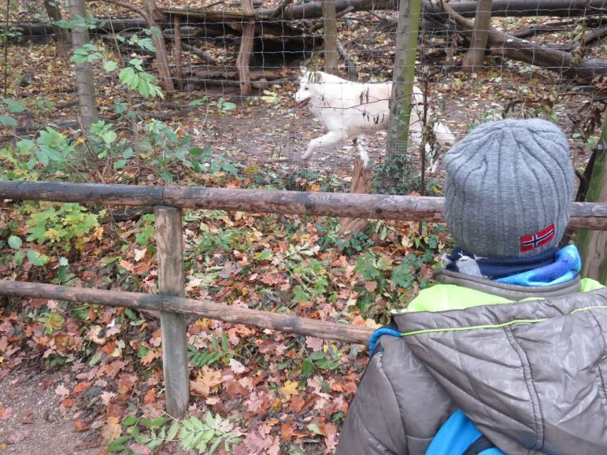 2016_11_outing_zoo-21