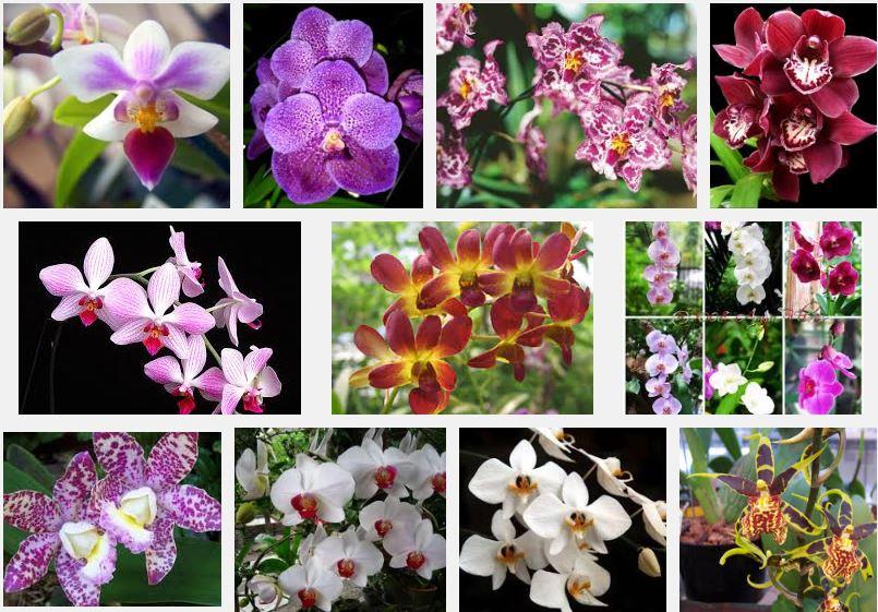 Panduan Cara Menanam Bunga Anggrek Step by Step | Artikel Pertanian