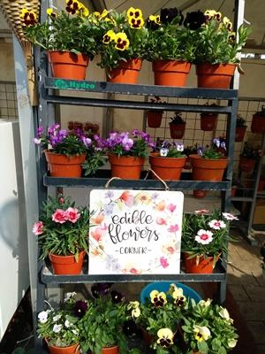 Pertanian: Edible Flowers, Bunga-bunga yang Bisa Dikonsumsi