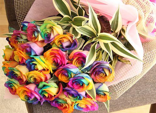 4 Cara Menanam Bunga Mawar Rainbow dan Perawatannya | Artikel Pertanian