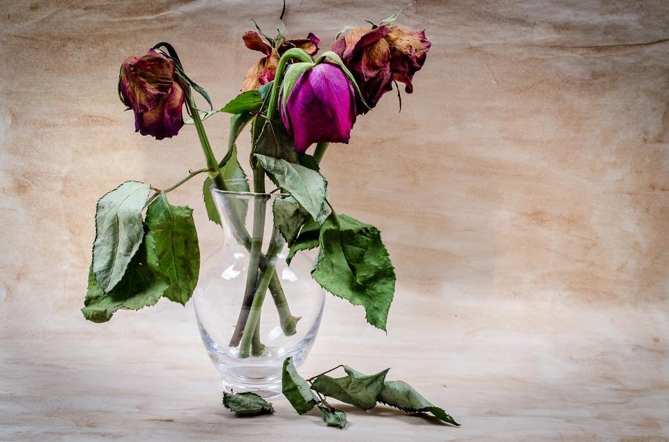 10 Cara Merawat Bunga Mawar Agar Tidak Layu | Artikel Pertanian