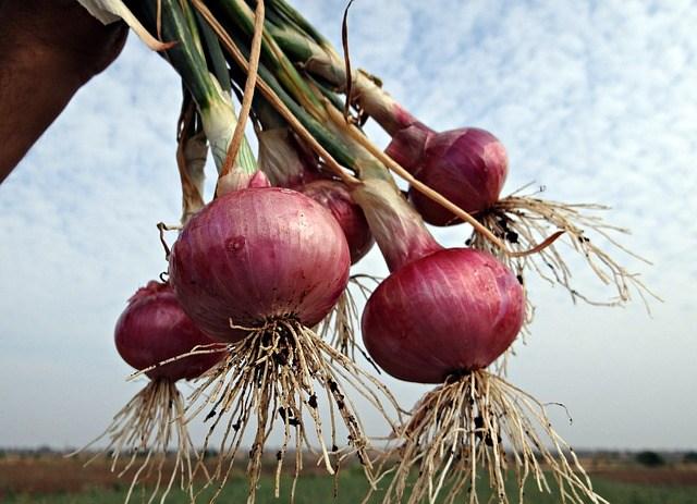 8 Cara Merawat Tanaman Bawang Merah di Musim Hujan dengan Mudah | Artikel Pertanian