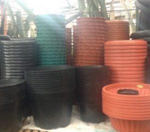 9 Cara Menanam Bawang Merah di Pot atau Polybag (#Teknik Mudah) | Artikel Pertanian