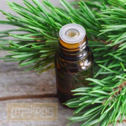 Da Lat Natural Pine essential oil with dropper