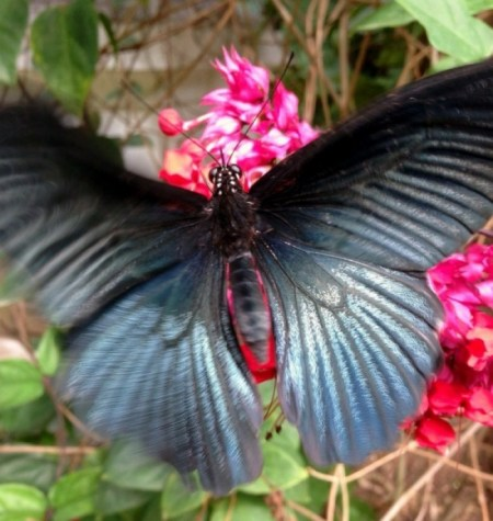 Contact Us Beautiful butterflies are everywhere in Laos contact us Contact Us laos butterfly opt e1422787690309