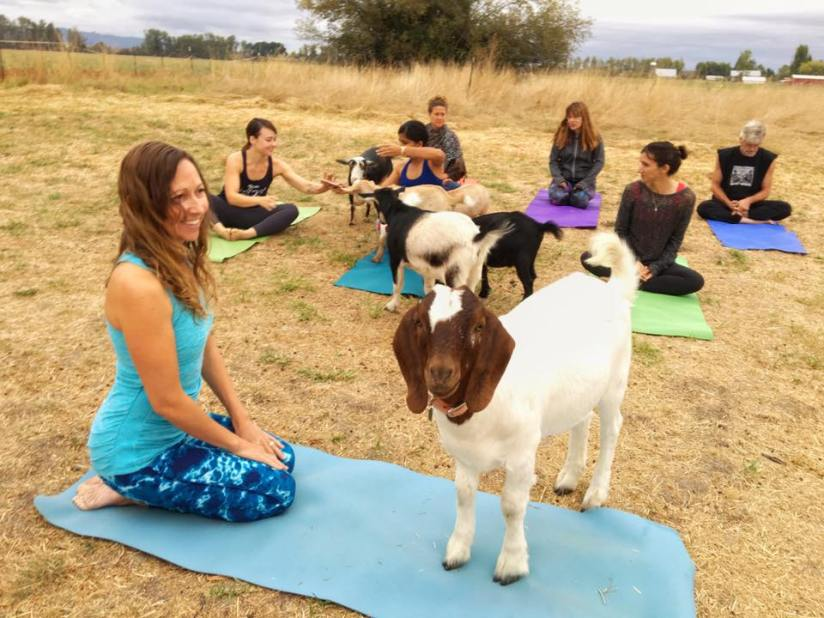 goat-yoga-field-oregon